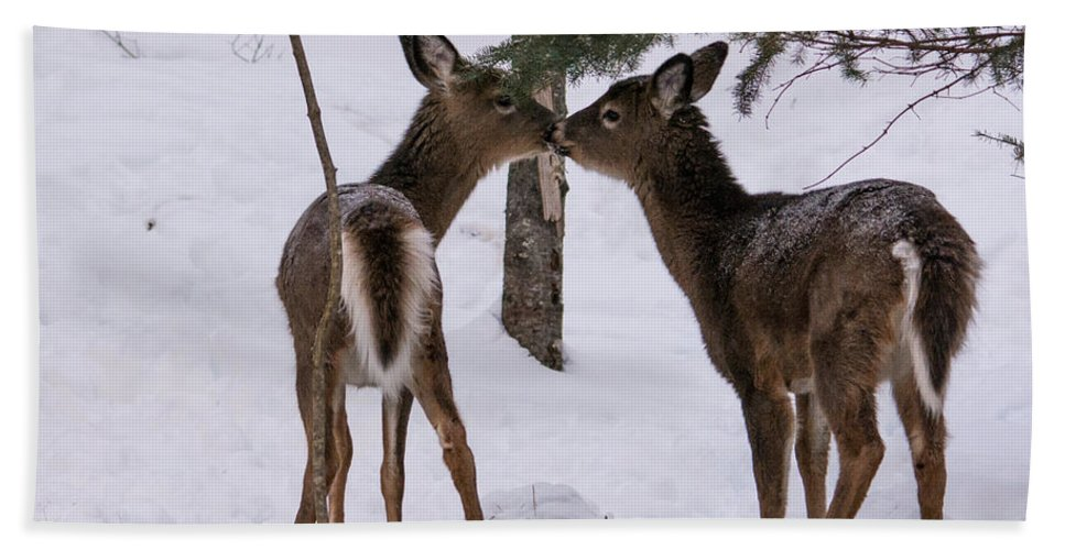 Beach Towel featuring the photograph Kissing Deer by Cheryl Baxter