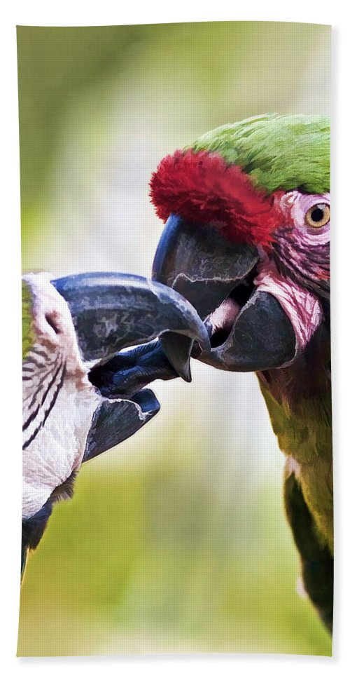 Birds Beach Towel featuring the photograph Kissing Macaws by Marcia Colelli