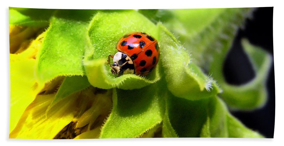 Ladybug Beach Towel featuring the photograph Ladybug And Sunflower by Christina Rollo