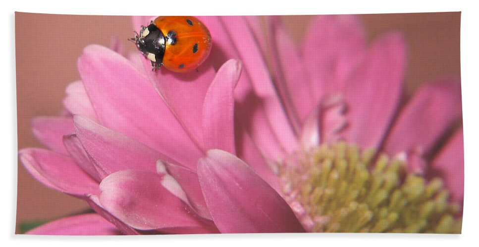 Lady Bug Beach Towel featuring the photograph Lady Bug by David and Carol Kelly