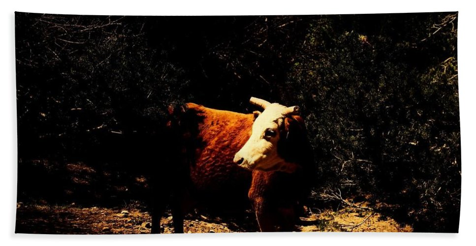 Cow Beach Towel featuring the photograph Lady Cow by Jessica Shelton