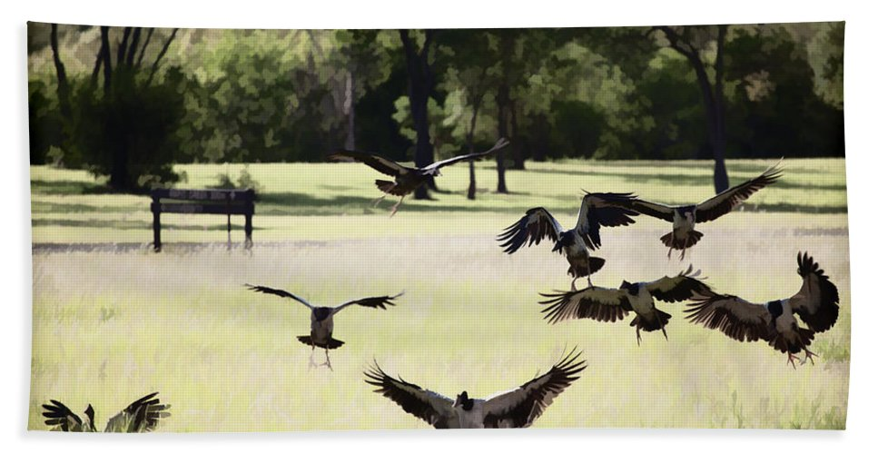 Magpie Geese Beach Towel featuring the photograph Landing Zone by Douglas Barnard