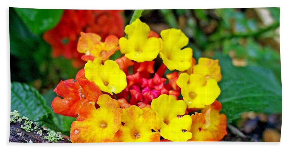 Plants Beach Towel featuring the photograph Lantana Flowers 2 by Duane McCullough