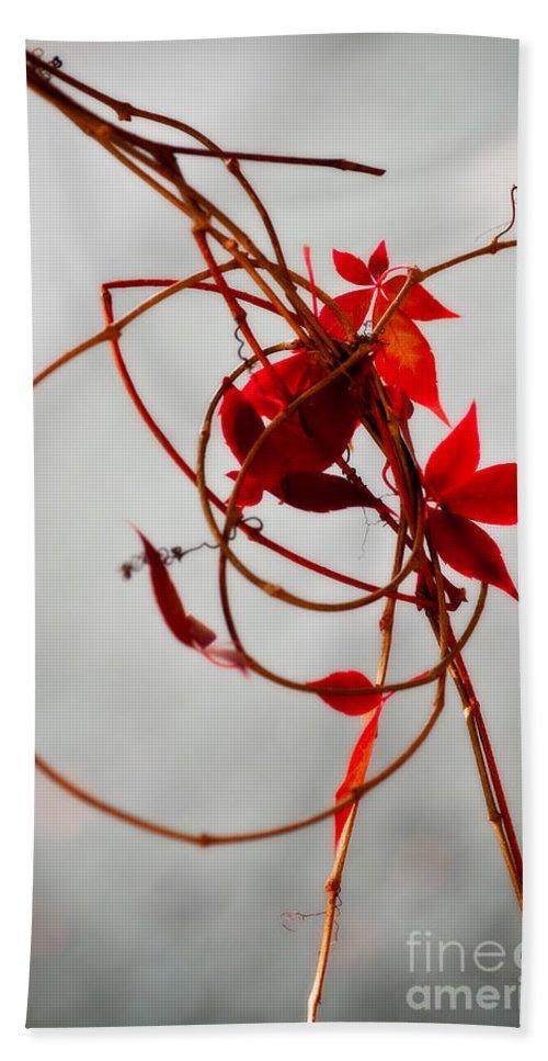 Autumn Beach Towel featuring the photograph Last Leaves by Venetta Archer