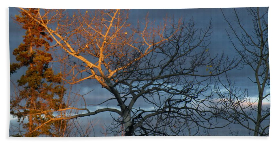 Last Beach Towel featuring the photograph Last Light Last Leaves by Brian Boyle