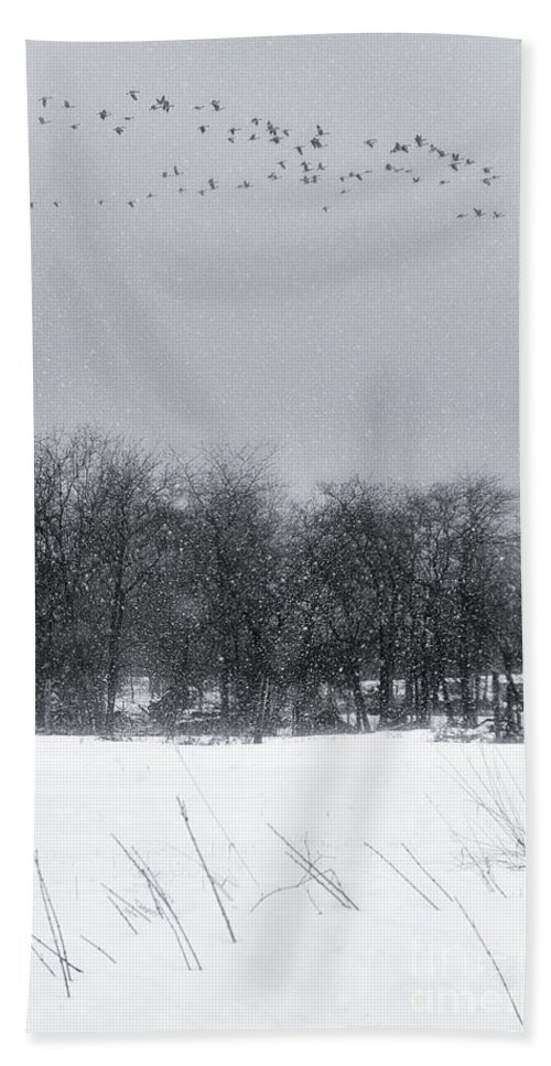 Michele Beach Towel featuring the photograph Late Migration by Michele Steffey