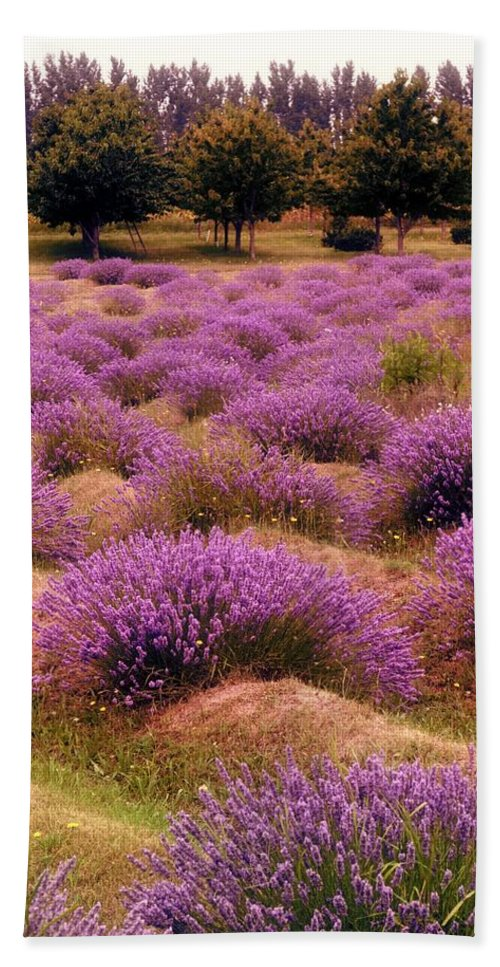 Lavender Beach Towel featuring the photograph Lavender Fields 2 by Michelle Calkins