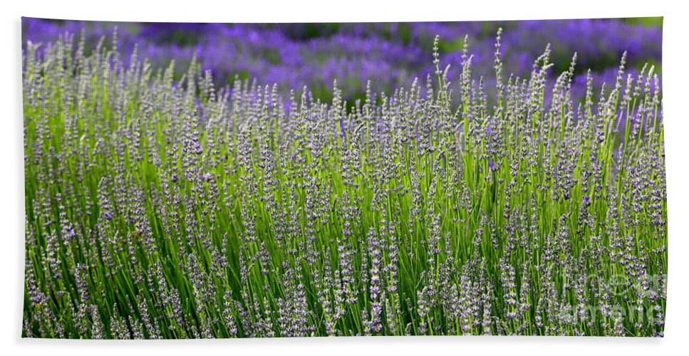 Lavender Beach Towel featuring the photograph Lavender Layers by Carol Groenen
