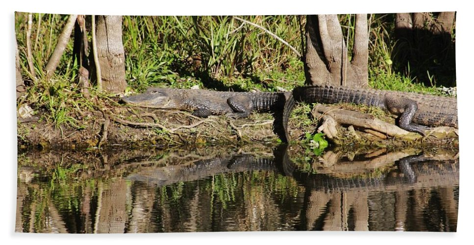 Gator Beach Towel featuring the photograph Lazy Day by Chuck Hicks
