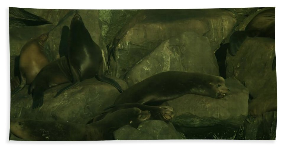 Sea Lions Beach Towel featuring the photograph Lazy Sea Lions by Jeff Swan