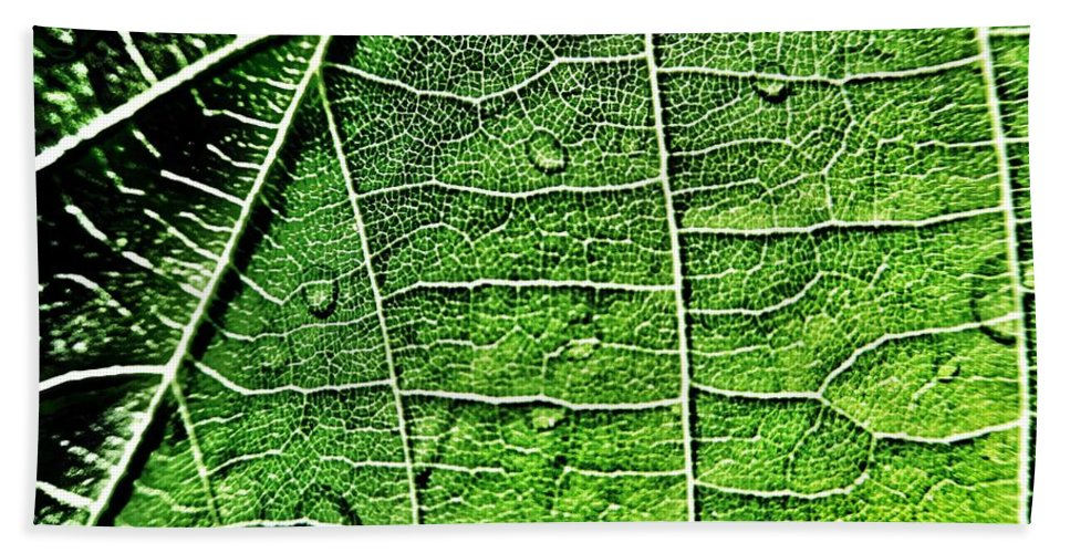 Leaf Beach Towel featuring the photograph Leaf Abstract - Macro Photography by Marianna Mills