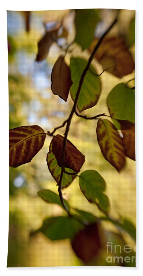 Autumn Beach Towel featuring the photograph Leaves In The Breeze by Venetta Archer