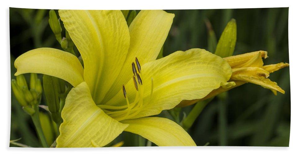 Hemerocallis Beach Towel featuring the photograph Lemon Yellow Daylily Blossom by Kathy Clark