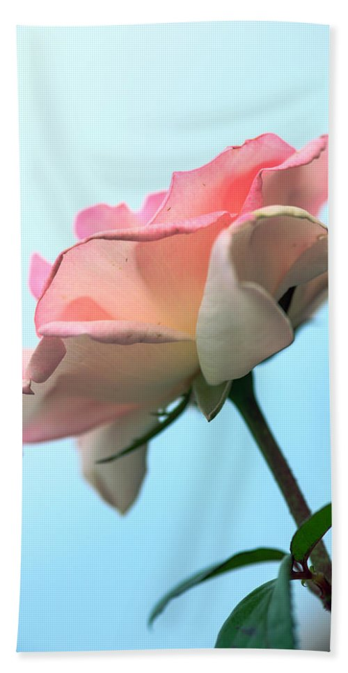 Bumble Bee Beach Towel featuring the photograph Life Is All Roses And Blue Sky by Sennie Pierson