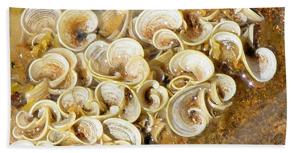 Sea Life Beach Towel featuring the photograph Life On The Rocks by Mary Deal