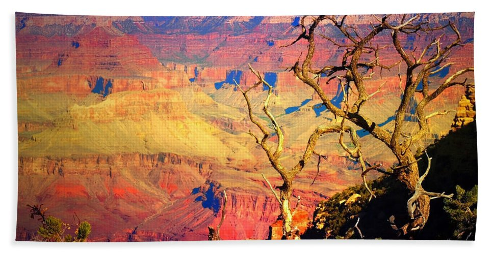 Tree Beach Towel featuring the photograph Light In The Canyon by Tara Turner