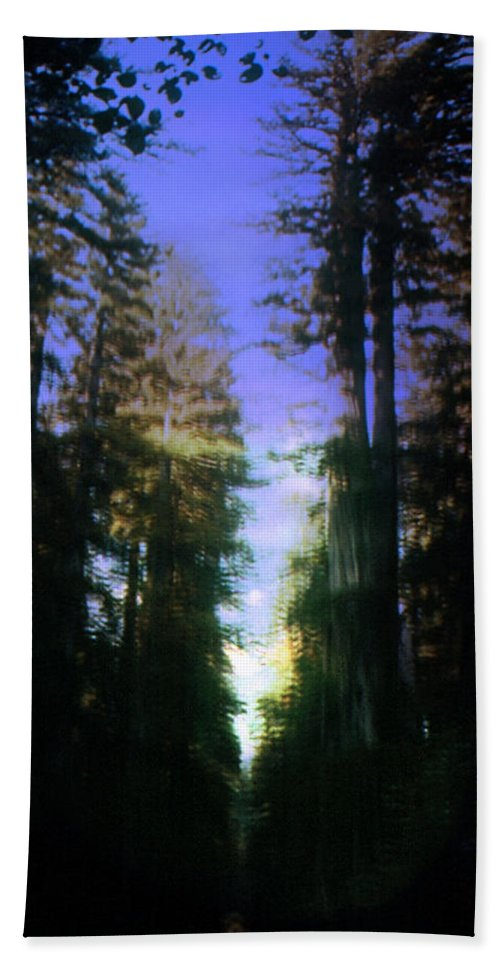 Forest Beach Towel featuring the digital art Light Through The Forest by Cathy Anderson