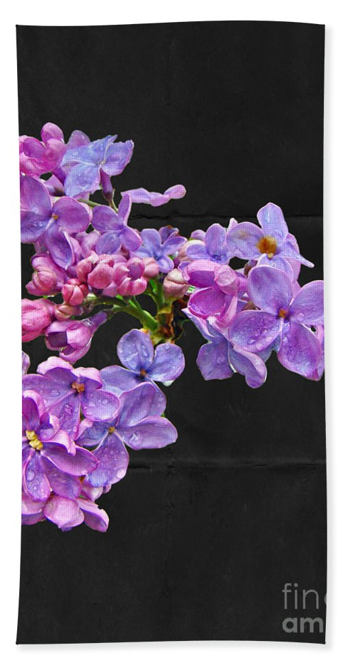 Lilac Beach Towel featuring the photograph Lilacs - Perfumed Dreams by Mother Nature