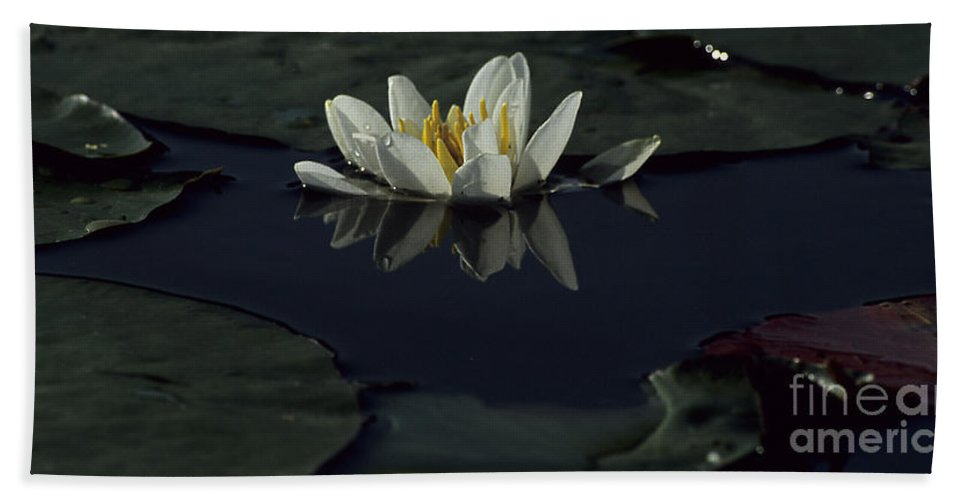Lilly Beach Towel featuring the photograph Lilly Of The Morning by Sharon Elliott