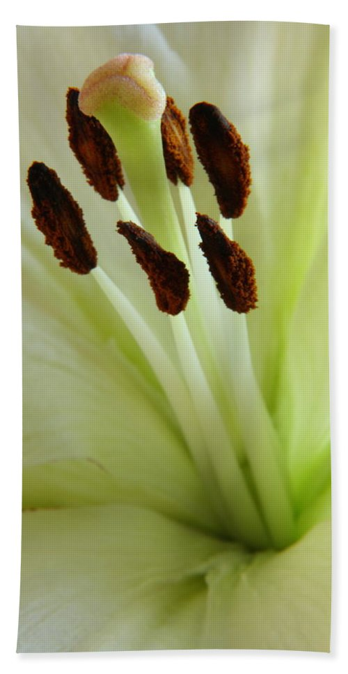 Lily Beach Towel featuring the photograph Lily 2am-114584 by Andrew McInnes
