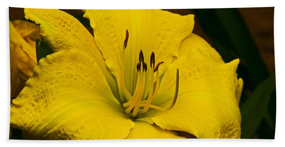 Lily Beach Towel featuring the photograph Lily by David Campbell