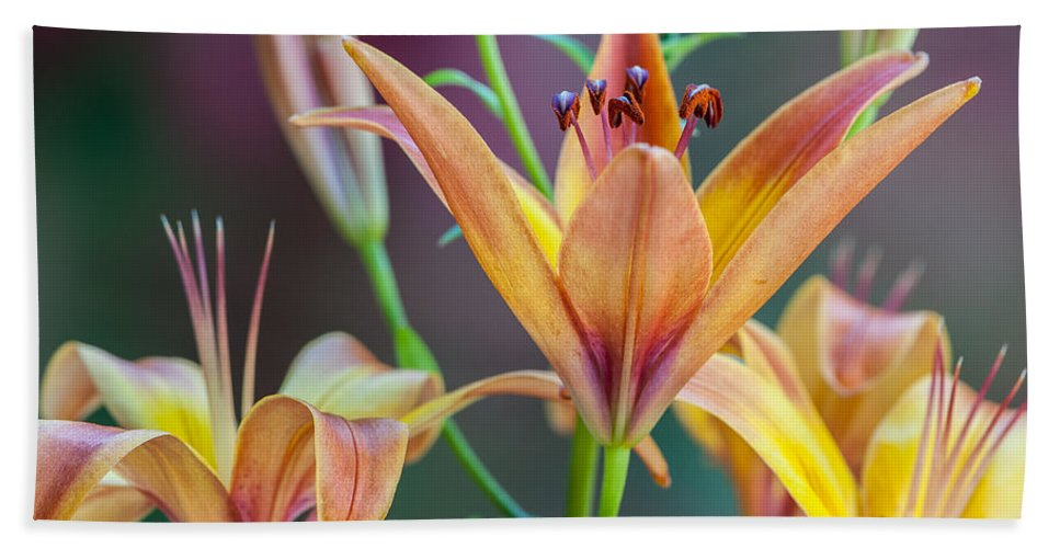 Lily Beach Towel featuring the photograph Lily From The Garden by Randy Walton