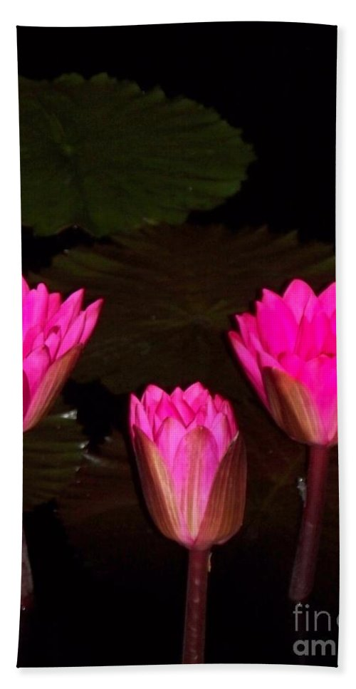 Water Lilies Beach Towel featuring the photograph Lily Night Time by Eric Schiabor