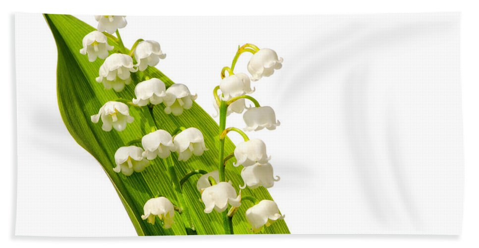 Convallaria Beach Towel featuring the photograph Lily Of The Valley by TouTouke A Y