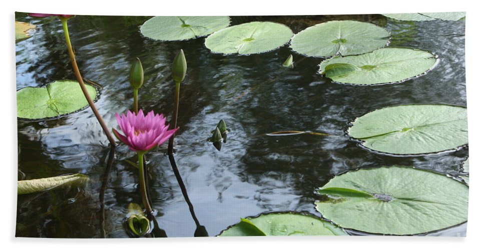 Waterlily Beach Towel featuring the photograph Lily Pond by Irina Davis