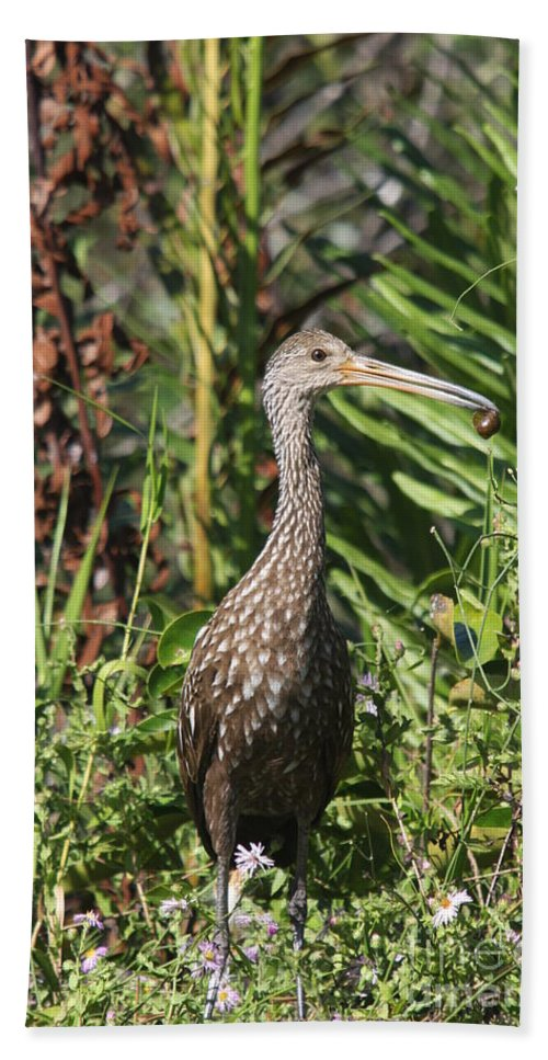 Limpkin Beach Towel featuring the photograph Limpkin With An Apple Snail by Christiane Schulze Art And Photography