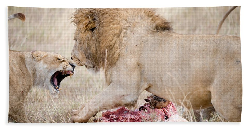 Photography Beach Towel featuring the photograph Lion And A Lioness Panthera Leo by Panoramic Images