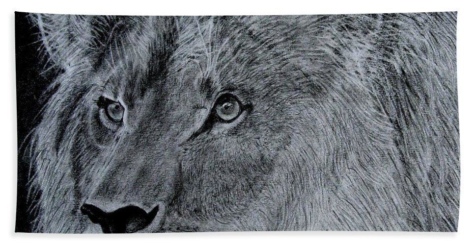 Drawing Beach Towel featuring the drawing Lion by Steve Keller