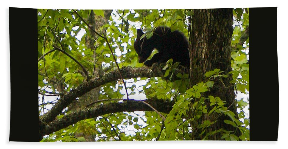 American Black Bear Beach Towel featuring the photograph Little Bear Cub In Tree Cades Cove by Cynthia Woods