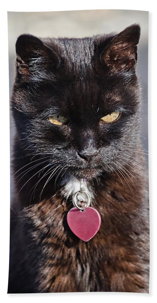 Cat Beach Towel featuring the photograph Little Black Kitty by Susie Peek