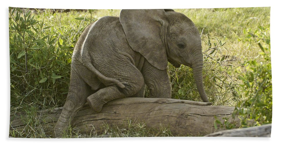 Africa Beach Towel featuring the photograph Little Elephant Big Log by Michele Burgess