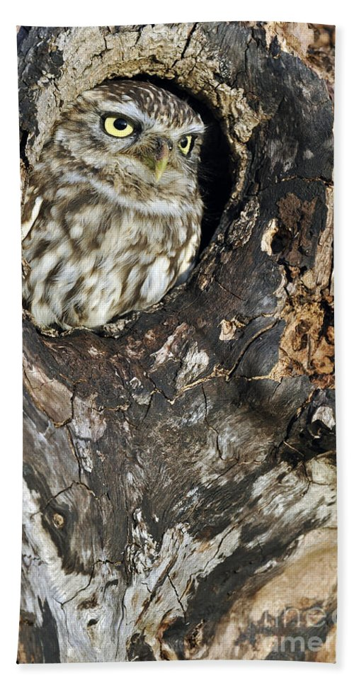 Little Owl Beach Towel featuring the photograph Little Owl 3 by Arterra Picture Library
