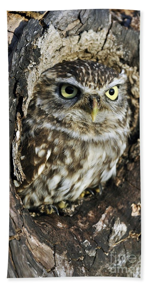 Little Owl Beach Towel featuring the photograph Little Owl 6 by Arterra Picture Library