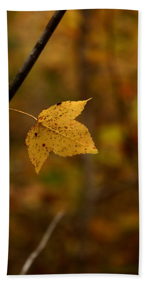 Autumn Beach Towel featuring the photograph Little Yellow Leaf by Karen Harrison