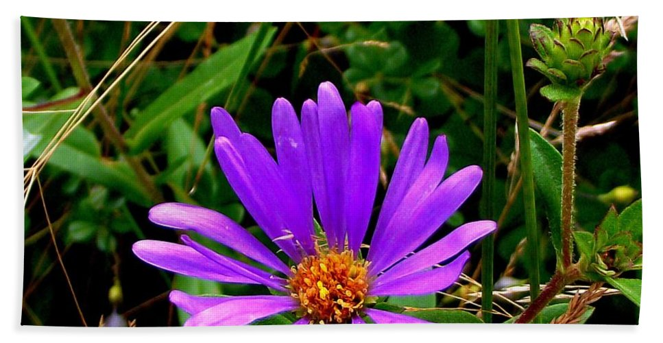 Aster Beach Towel featuring the photograph Lone Aster by CapeScapes Fine Art Photography