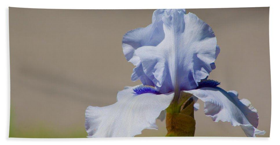 Iris Beach Towel featuring the photograph Lone Iris by Lynne Jenkins