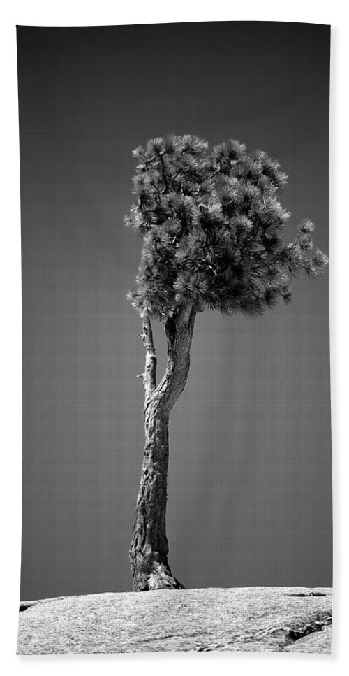 Black & White Beach Towel featuring the photograph Lone Pine II by Peter Tellone
