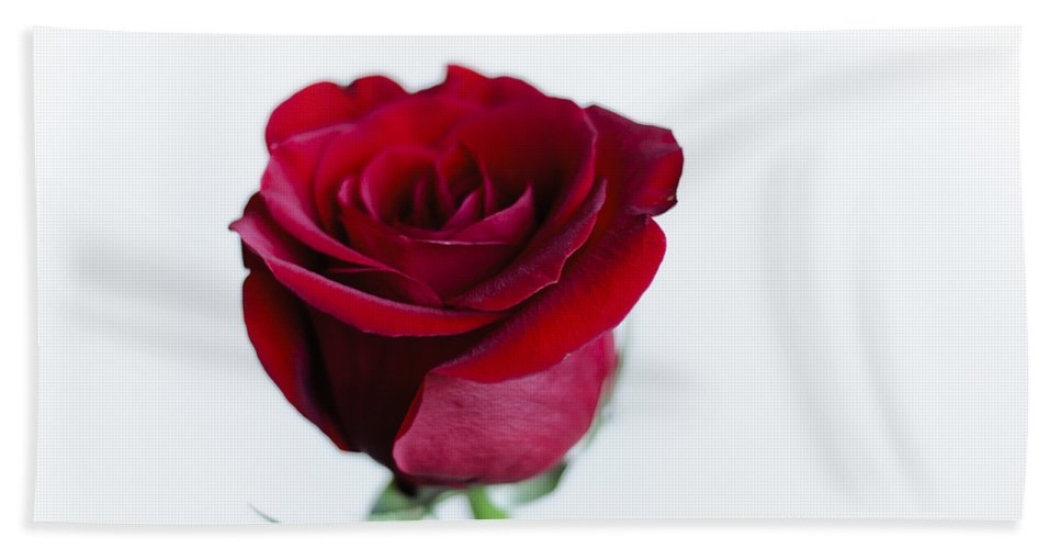 Alone Beach Towel featuring the photograph Lone Rose by Christi Kraft