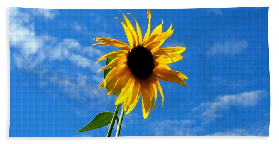 Nature Beach Towel featuring the photograph Lone Sunflower In A Summer Blue Sky by Amy McDaniel