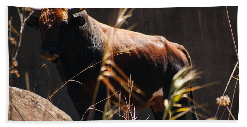 Bull Beach Towel featuring the photograph Lonesome Bull by Tracey Beer