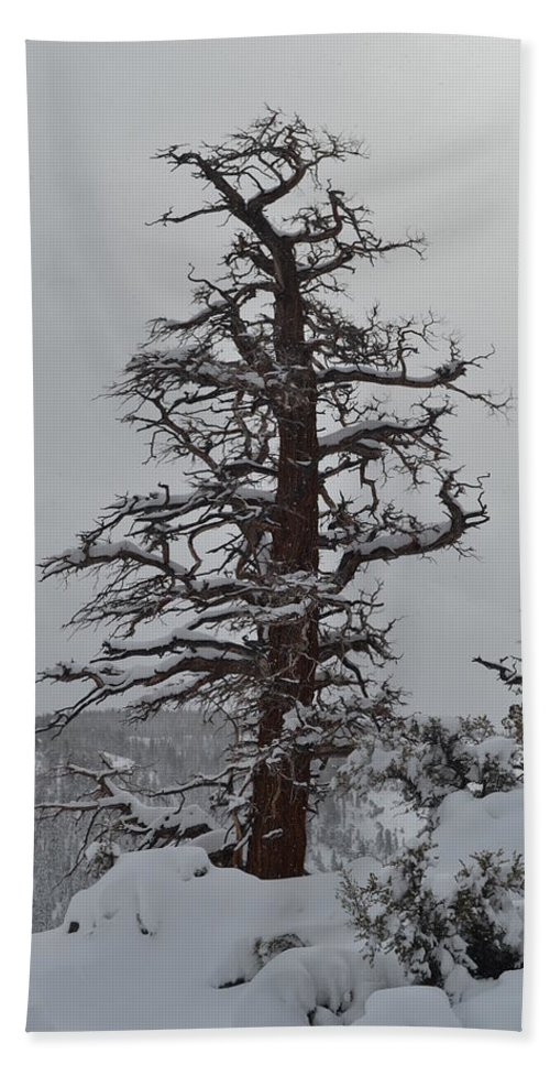 Lonesome Tree Beach Towel featuring the photograph Sentinel by Christine Owens