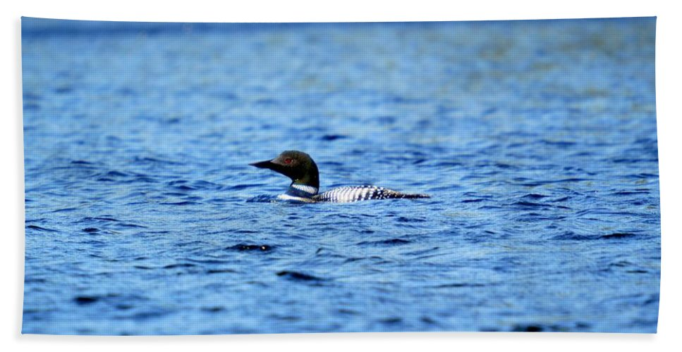 Loon Beach Towel featuring the photograph Loon by Thomas Phillips