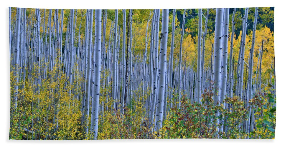 Aspen Grove Beach Towel featuring the photograph Lost In The Crowd by Jeremy Rhoades