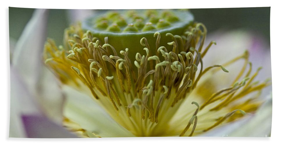 Lotus Beach Towel featuring the photograph Lotus Detail by Heiko Koehrer-Wagner
