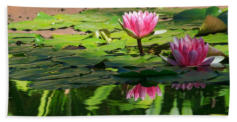 California Beach Towel featuring the photograph Lotus Flower Reflections by Beth Sargent