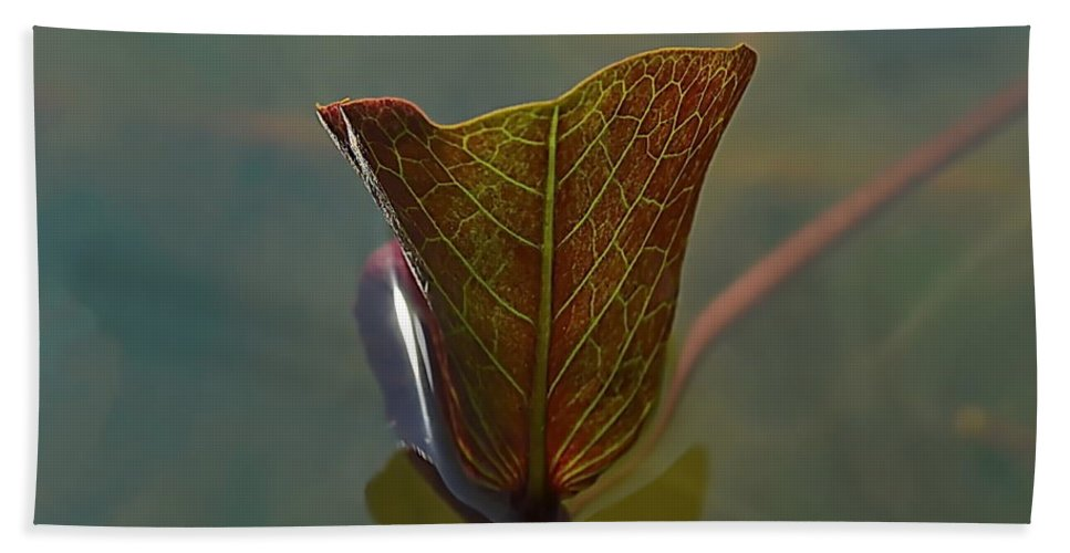 Michelle Meenawong Beach Towel featuring the photograph Lotus Leaf by Michelle Meenawong